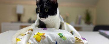 Katzenschlafsack nähen